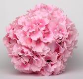 Bola de flores rosadas Imagen de archivo libre de regalías