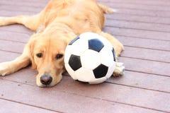 Bola de futebol do cão Fotografia de Stock