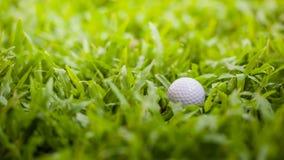 Bola de golfe Fotografia de Stock Royalty Free