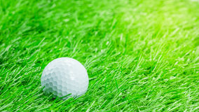 A bola de golfe branca está na grama Fotografia de Stock