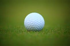 Bola de golfe branca na grama Foto de Stock Royalty Free
