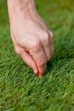 A bola de golfe e o ferro na grama verde detalham o macro Imagem de Stock