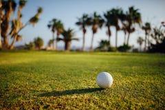 Bola de golfe na grama verde, palmeiras no fundo fotografia de stock
