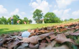 Bola de golfe nas folhas secas Imagens de Stock