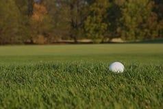 Bola de golfe no áspero imagem de stock