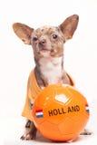 Bola de Holanda del perro del fútbol Imagenes de archivo