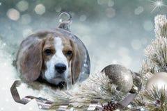 Bola de la Navidad con el perro del beagle en la nieve Fotografía de archivo libre de regalías