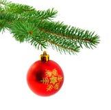 Bola de la Navidad en la ramificación del pino del abeto Fotografía de archivo libre de regalías