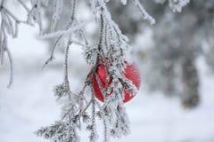 Bola de la Navidad en ramas de árbol escarchadas de abeto Fondo de la falta de definición del invierno Foto de archivo
