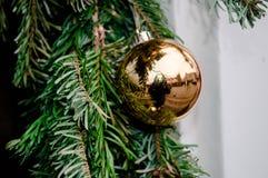 Bola de la Navidad en un árbol fotos de archivo libres de regalías