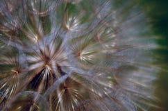Bola de la pelusa Fotos de archivo