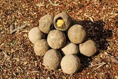 Bola de la tierra del insecto de Caterpillar Fotos de archivo