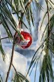 Bola de lujo de Navidad del rojo en un árbol de pino Imágenes de archivo libres de regalías