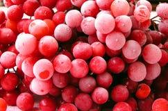 Bola de nieve 1 Foto de archivo libre de regalías