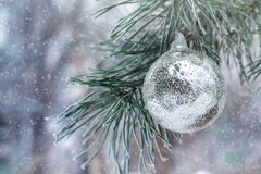 A bola de prata pesa no ramo do pinho Imagem de Stock Royalty Free