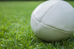 Bola de rugby Fotos de Stock