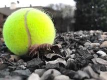 Bola de tênis Imagens de Stock Royalty Free