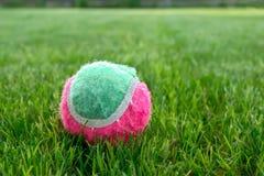 Bola de tênis no gramado verde em um dia ensolarado imagens de stock royalty free