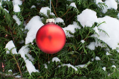 Bola del árbol de navidad en árbol vivo Fotos de archivo