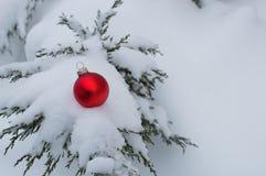 Bola del árbol de navidad en rama del enebro Fotografía de archivo libre de regalías