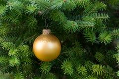 Bola del oro de la Navidad en el árbol de navidad Foto de archivo