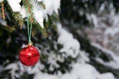 Bola del pino y de la Navidad Fotos de archivo