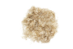 Bola do close-up do cabelo de lãs Bola do cabelo isolada no fundo branco Limpeza das lãs e do cabelo Lãs do animal de estimação d Imagens de Stock