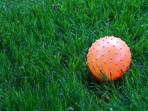 Bola e hierba Imagenes de archivo