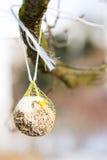 Bola gorda como comida de pájaro Fotografía de archivo