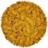 Bola grande das flores alaranjadas Foto de Stock