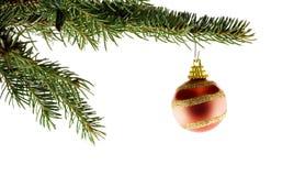 Bola roja de la Navidad en árbol de abeto Imágenes de archivo libres de regalías