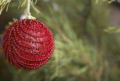 Bola roja de la Navidad en el primer del árbol Fotos de archivo