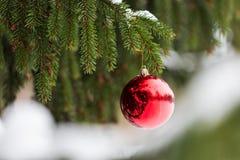 Bola roja de la Navidad en rama de árbol de abeto con nieve Fotos de archivo