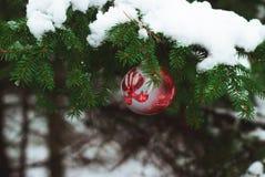 Bola roja de la Navidad en rama de árbol nevosa Fotografía de archivo libre de regalías