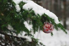 Bola roja de la Navidad en rama de árbol nevosa Foto de archivo libre de regalías