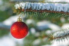 Bola roja en el árbol de navidad Imágenes de archivo libres de regalías