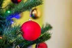 Bola roja en el árbol de navidad Fondo ` S del Año Nuevo y la Navidad Imagen de archivo
