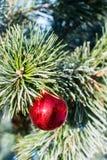Bola roja grande de las decoraciones de la Navidad en el árbol de Navidad al aire libre Fotografía de archivo