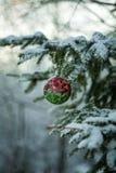 Bola roja y verde en el árbol de navidad Fotografía de archivo