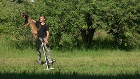 Bola sobre obstáculo, perro de salto de la ejecución almacen de metraje de vídeo
