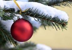 Bola vermelha do Natal na árvore em exterior, neve na árvore de Natal Fotografia de Stock