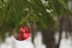 Bola vermelha do Natal no ramo de árvore nevado Foto de Stock Royalty Free