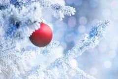 Bola vermelha do Natal que pendura em um ramo de árvore da neve Imagem de Stock
