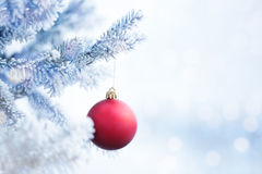 Bola vermelha do Natal que pendura em um ramo de árvore da neve Fotografia de Stock