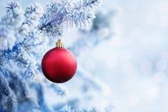Bola vermelha do Natal que pendura em um ramo de árvore da neve Fotografia de Stock Royalty Free