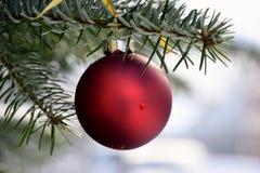Bola vermelha do Natal que pendura na árvore em exterior Fotos de Stock