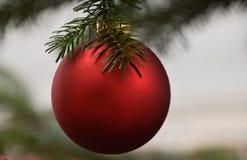Bola vermelha do Natal que pendura na árvore do Xmas Fotografia de Stock Royalty Free