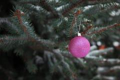 Bolas da árvore de Natal no ramo de Fotos de Stock Royalty Free