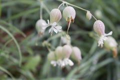 Bolas da flor Fotos de Stock Royalty Free