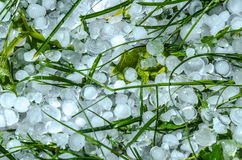 Bolas de gelo da saraiva na grama Fotografia de Stock Royalty Free
